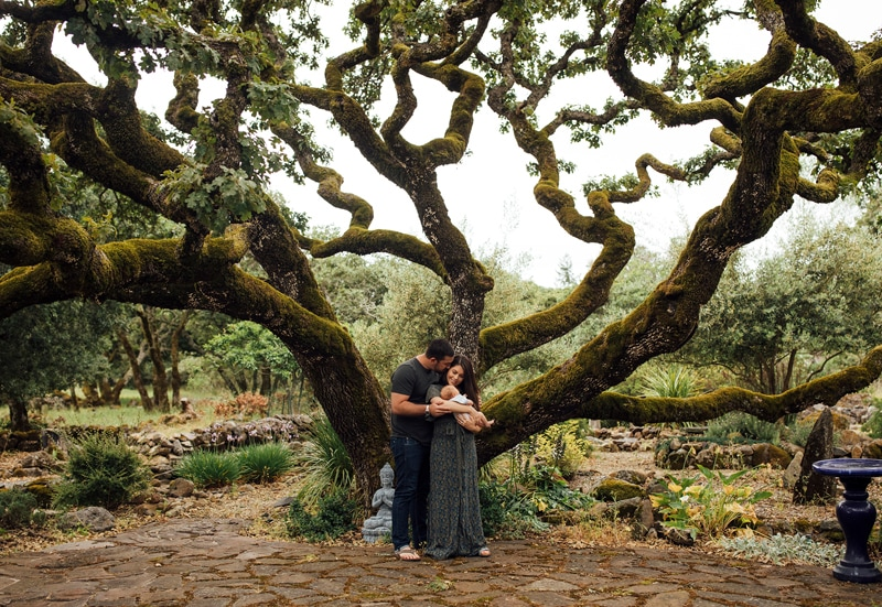 Sonoma Family Photography, couple holding baby underneath a large tree